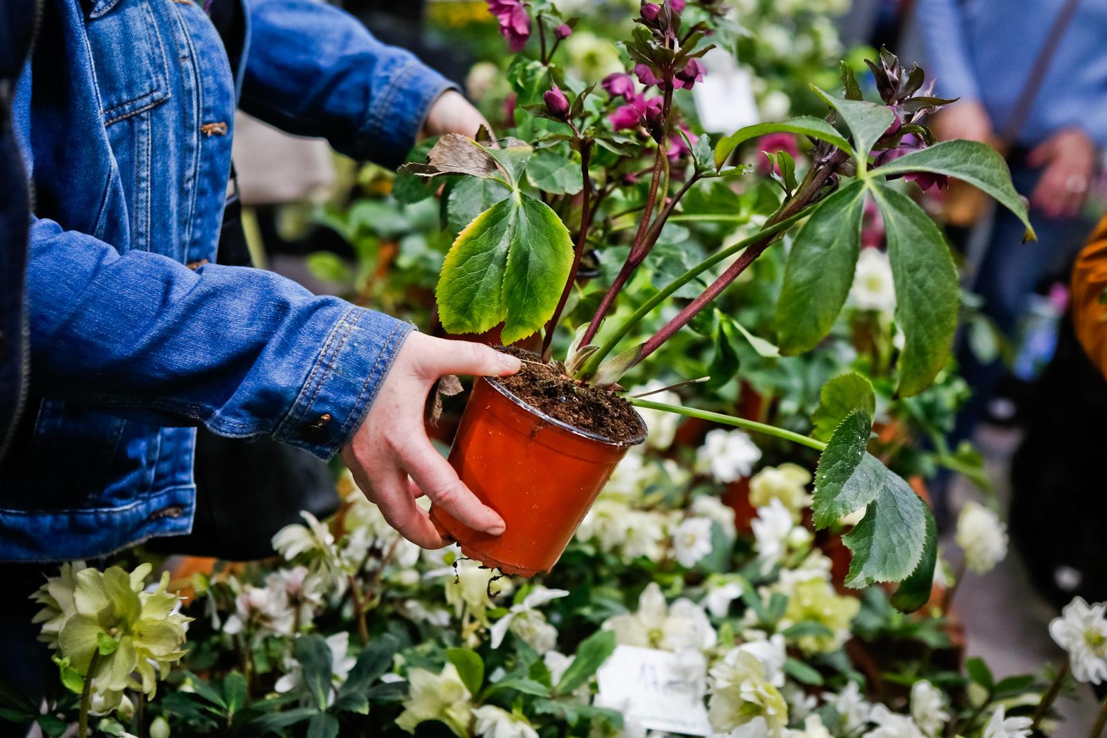 Wiosna na balkonie i w ogrodzie! Wiosenny Targ Ogrodniczy już w weekend
